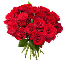 bouquet de 24 roses rouge